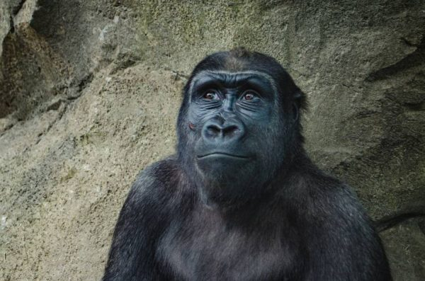 Apes With Trading Accounts Finding Alpha