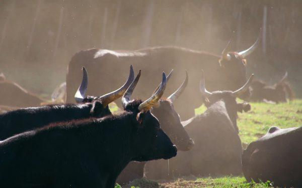 Market Bull Run - J Paul Hendricks