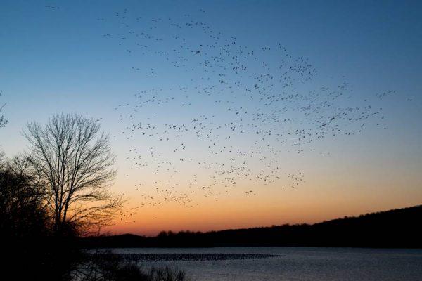 overcoming fear birds sky