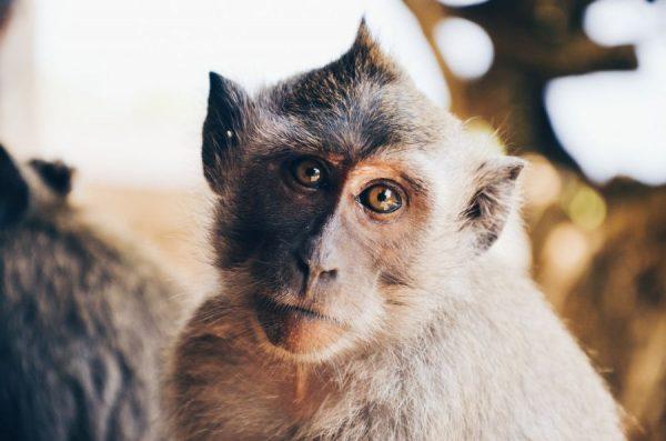 wall street bets clover - tan monkey