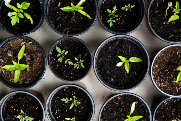 wefunder equity offering - green sprouts